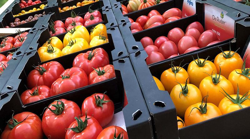 Tomato World 20-02