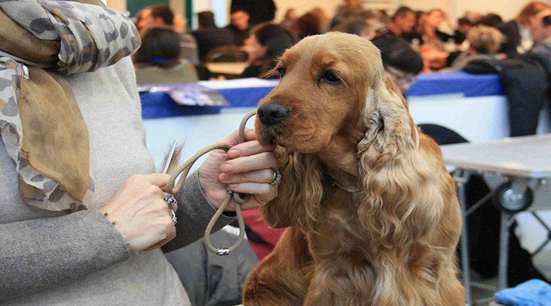 Expo Canina 29-02